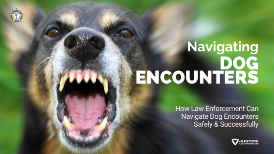 Navigating Dog Encounters Safely & Successfully